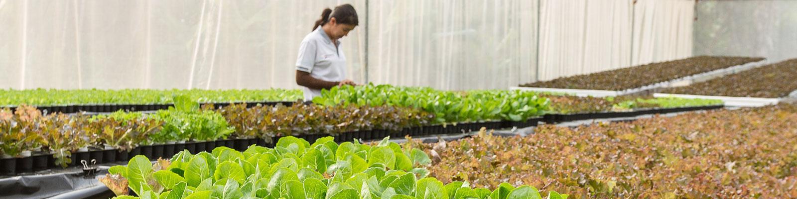 organic farming,เกษตรอินทรีย์,เกษตรปลอดสาร