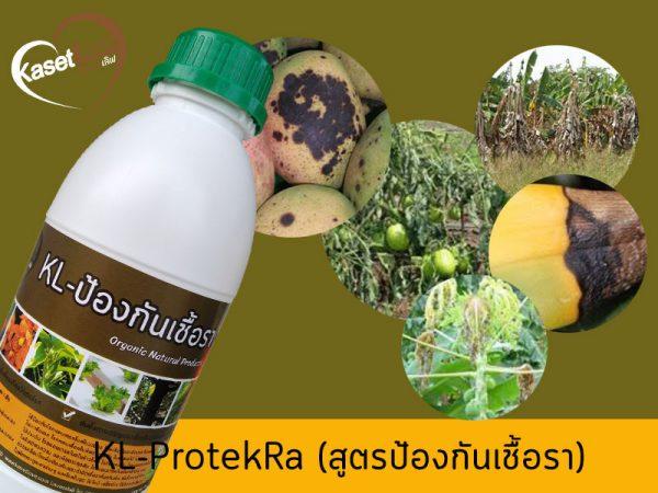 รักษาโรคราในพืช สารสกัดสมุนไพร