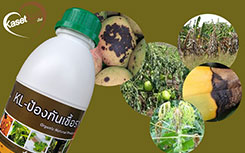 สมุนไพรรักษาโรคพืช
