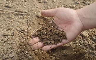 ปุ๋ย,fertilizer,ธาตุอาหารพืช