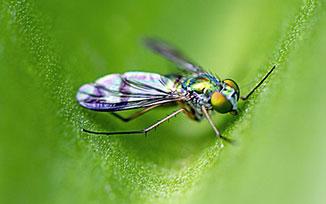 แมลงศัตรูพืช,การกำจัดแมลงศัตรูพืช