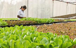 เกษตรอินทรีย์,การทำเกษตรอินทรีย์