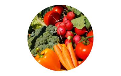 การใช้ไคโตซานในพืชผักสวนครัว