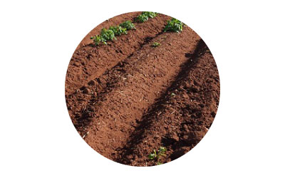 การใช้ไคโตซานปรับปรุงดิน